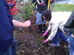 Planting seedlings at Crescent
