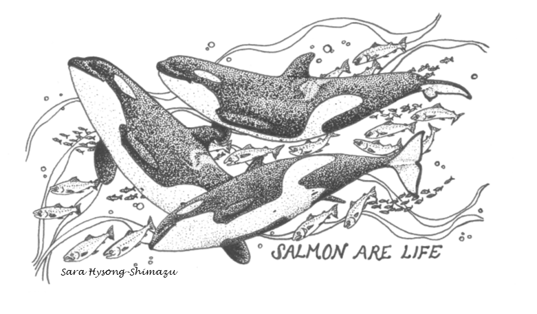 Salmon are Life. Illustration of Orcas swimming among salmon.