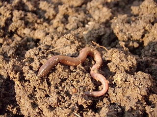 Soil with a worm on top of it.