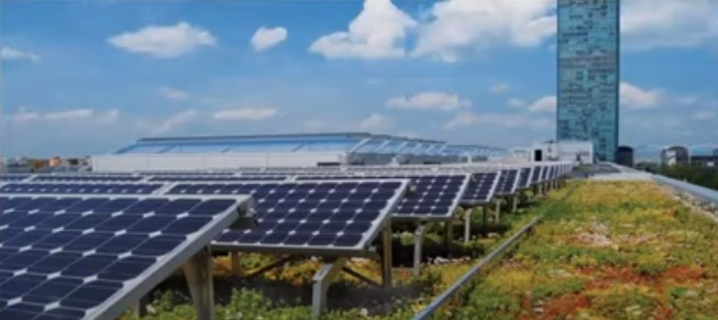 A roof with solar panels and plants growing next to and under them.