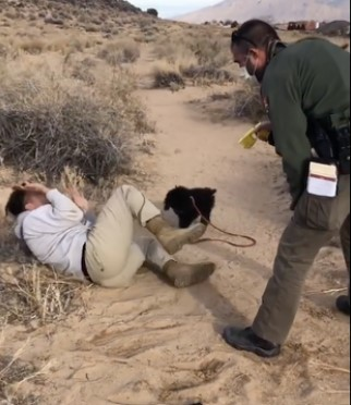 A man cowering on the ground with a National Park ranger standing over him while tasing him.