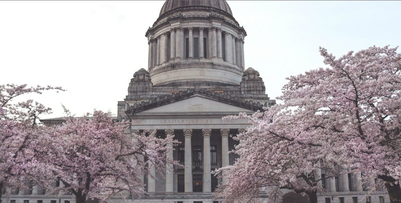 Washington State Capitol building with cherry trees in blossom.