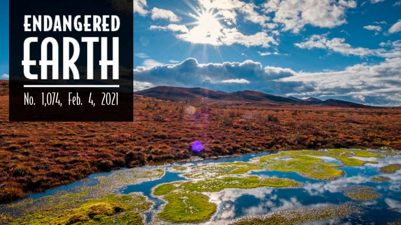 Endangered Earth Newsletter. Natural scene changes with each issue.