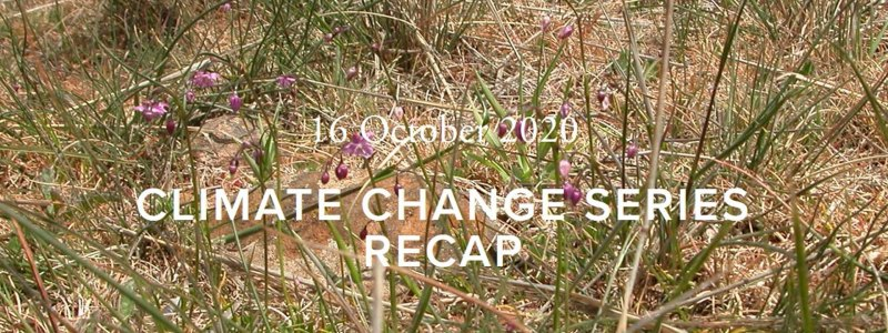 Climate Change Series Recap. Violet wildflowers in the brush.
