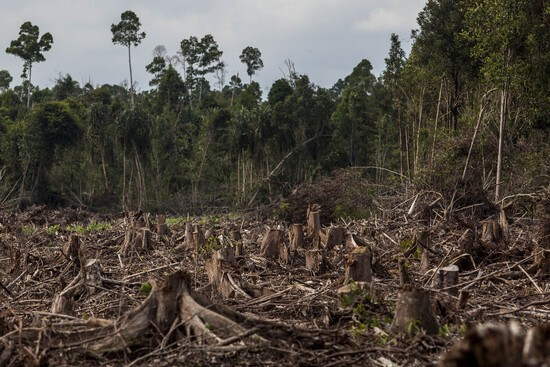 A logged stump-field. Getty Images
