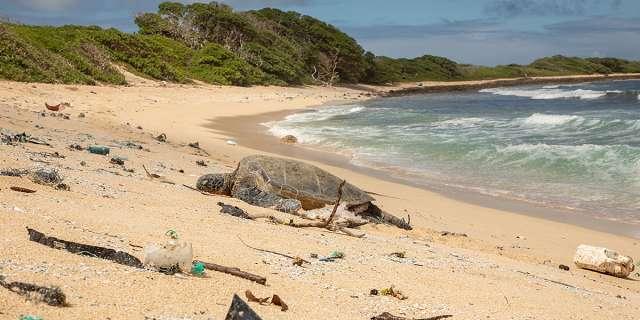 Sea Turtle on Beach with plastic debris.