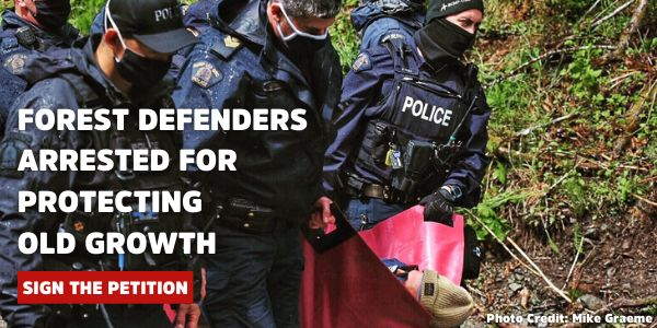 Forest Defenders arrested for protecting Old Growth - Sign the Petition