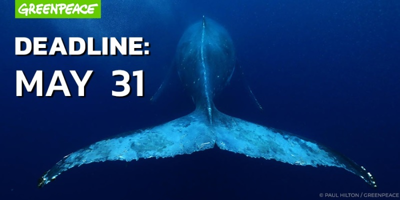 Greenpeace Deadline May 31. Whale swimming away from the camera.