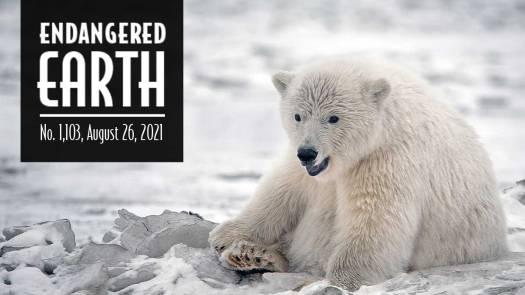 Endangered Earth 8-2021