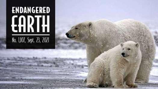 Endangered Earth 9-2021