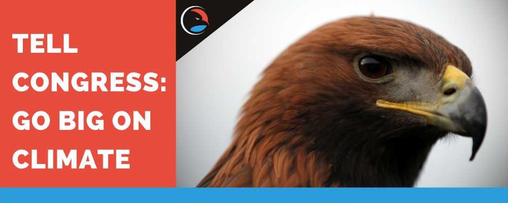 Tell Congress: Go Big on Climate. Closeup of Eagle face.