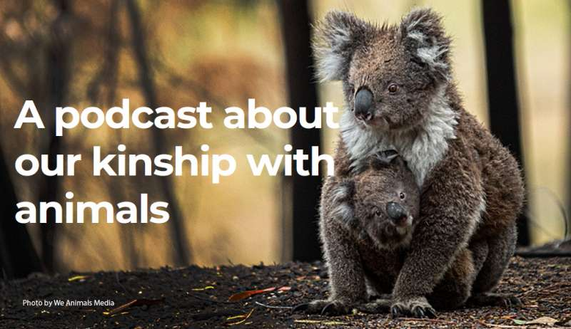 A podcast about our kinship with animals. Koala mom and baby in pouch.